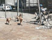 قارئ يشكو انتشار الكلاب الضالة فى شارع كفافى بسانت فاتيما