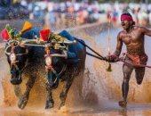 عامل هندى يكسر رقم العداء التاريخى أوسين بولت فى سباق بحقول الأرز
