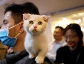 دراسة: القطط قد تصاب بفيروس كورونا.. ومنظمة الصحة تحقق