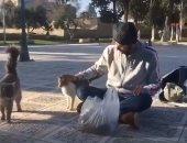 شاب فلسطينى يُطعم القطط فى ساحة المسجد الأقصى.. فيديو