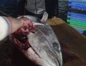 """""""ربك لما يريد"""".. فلسطينى يصطاد سمكة تونة وزنها 45 كيلو جرام بشباك نايلون"""