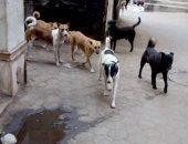 """""""الكلاب الضالة"""" شكوى سكان شارع سليم بحى الزيتون فى القاهرة"""