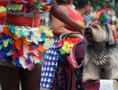 كلاب خارقون فى مهرجان ريو دى جانيرو الاستعراضى