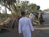 وقوع نخلة على طريق مصر أسوان الزراعى بسبب سوء الطقس للمرة الثانية وقطع أسلاك كهرباء