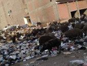 """""""سيبها علينا"""".. شكوى من انتشار القمامة بمنطقة القومية بأرض ام بيومى"""
