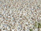 جيش من البط الصينى يصل عدده إلى 100 ألف لمكافحة الجراد فى باكستان