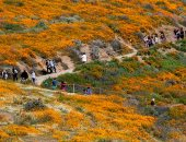 كاليفورنيا تعانى من أشد فتراتها جفافا خلال 150 عاما فى شهر فبراير