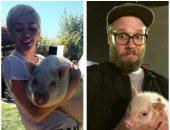نجوم عالميين يكشفون عن عشقهم للخنازير ويلتقطون الصور معها.. تعرف عليهم