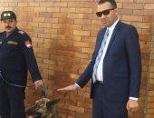 """الكلب البوليسى """"تيجى"""".. عام ونصف فى خدمة الميرى بحثا عن المتفجرات.. فيديو"""