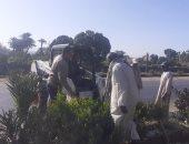 صور.. أسبوع النظافة يتواصل بالأقصر بتجميل المسار السياحى أمام مدينة الطود