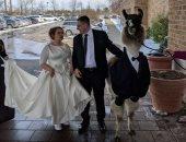 صور.. مفاجأة غريبة من أخ لشقيقته فى حفل زفافها.. اعرف ايه هى
