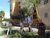 رئيس جهاز السادات: استكمال زراعة وصيانة المسطحات الخضراء بالمدينة