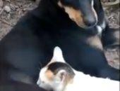"""""""عشان يتيمة"""".. كلبة تتبنّى قطة وترضعها بعد موت أمها.. فيديو"""