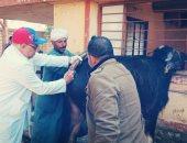 صور.. الزراعة تنفذ 163 قافلة بيطرية مجانية لعلاج الماشية.. اعرف التفاصيل