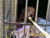 صينيون يبدعون لإطعام الحيوانات بطرق ذكية بعد تفشى كورونا.. اعرف القصة؟