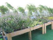 البيئة: زراعة أسطح المركز الثقافى البيئى خطوة لإعادة تطوير القاهرة التاريخية