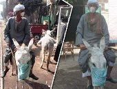 الإنسانية بشكل مختلف.. مزارع بقنا يضع كمامة لحماره خوفا من إصابته بكورونا