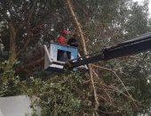 محافظة سوهاج: إزالة الأشجار والنخيل التى تسبب خطرا على المارة.. صور