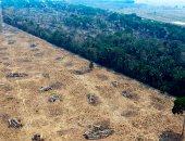 تحذيرات.. إزالة غابات الأمازون ترتفع 70% فى يناير وفبراير من 2020