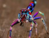دراسة: حركة أطراف العناكب تسهم فى تطوير الروبوتات الناعمة