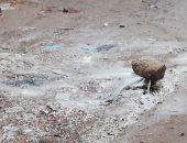 كسر مسورة مياه فى شارع عثمان ابن عفان بجسر السويس .. والأهالى يشتكون