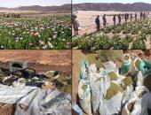 سقوط تجار مخدرات غسلوا 100 مليون في شراء العقارات بسوهاج
