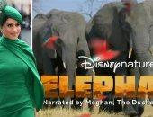 أول شغل بعد الملكية.. ميجان تعلق بصوتها على Elephant أحدث أفلام ديزنى فى إبريل