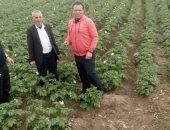 صور.. الزراعة: لجان مرورية بغيطان البطاطس الصيفى لزيادة الإنتاج