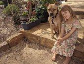 """كلب بدرجة ساعى بريد.. """"ناجيت"""" يساعد صديقته الطفلة فى نقل رسائل صديقتها"""