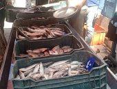 أسعار الأسماك بسوق العبور اليوم البلطى الأسوانى يبدأ من 17 والبورى من 32 جنيها