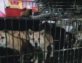 ديلى ميل: الصين مازالت تبيع الكلاب والقطط وسط أرضيات مليئة بالدماء.. صور