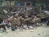 """""""سيبها علينا"""".. شكوى من تراكم القمامة بالنهضة حى السلام بالقاهرة"""