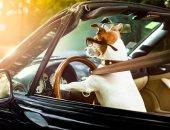 """الشرطة الأمريكية تطارد سيارة يقودها """"كلب"""" على طريق سريع.. اعرف الحكاية"""