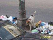 قارئة تشكو انتشار القمامة بالعجمى وتطالب بجمع القمامة من المصدر بالإسكندرية