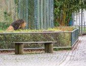 حدائق حيوان ألمانيا تطلب من أنجيلا ميركل دعما بـ 100 مليون يورو بسبب كورونا