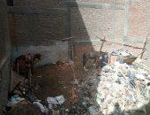أهالى شارع طه حسين بشبرا الخيمة يشكون انتشار القمامة والرائحة الكريهة