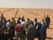 تخصيص 500 فدان لزراعة نخيل المجدول والبارحى بمركز الداخلة