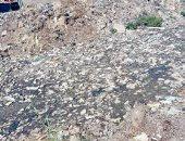 قارئة تطالب ردم المصرف الكبير بقرية الجابرية بالمحلة.. وتؤكد: ممتلئ بالقمامة