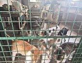 كورونا يفرض حظرا على الحيوانات الأليفة فى الفلبين.. ما التحديات التى تواجهها؟