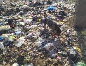 أهالى مركز الوسطى ببنى سويف يتضررون من انتشار القمامة ويطالبون بحل