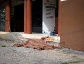 مأساة بالإكوادور.. جثث متعفنة لضحايا كورونا بالشوارع ..فيديو