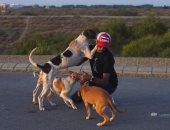 باكستانيون يطاردون الحيوانات الأليفة فى الشوارع بسبب مخاوف انتشار عدوى كورونا