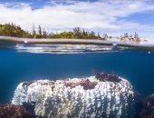 الحاجز المرجانى العظيم بأستراليا يتحول للأبيض.. وعلماء: الشعاب تنذرنا بتغير المناخ