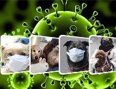 الأمم المتحدة تقدم 10 توصيات لمنع انتشار الأوبئة الحيوانية
