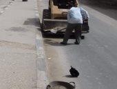 رفع 7 أطنان قمامة وتركيب وصيانة كشفات الإنارة بمدينة أخميم فى سوهاج