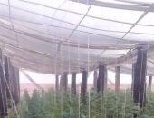 تعرف على تفاصيل مشروع أكبر صوبة زراعية صديقة للبيئة بالوادى الجديد