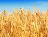 الأردن يشترى 120 ألف طن من القمح فى مناقصة