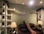 آخر دلع.. رجل يبنى برجين بمنزله لتسلية قططه بلعبة التسلق فى العزل.. صور