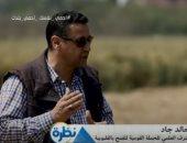 المشرف على الحملة القومية للقمح بالقليوبية: المحصول لم يتأثر بالصدأ الأصفر.. فيديو