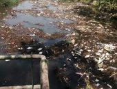 القمامة تحاصر محطة مياه بهواش فى المنوفية.. والأهالى يطالبون برفعها.. صور
